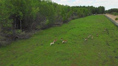 Deers Running In Fenced Field