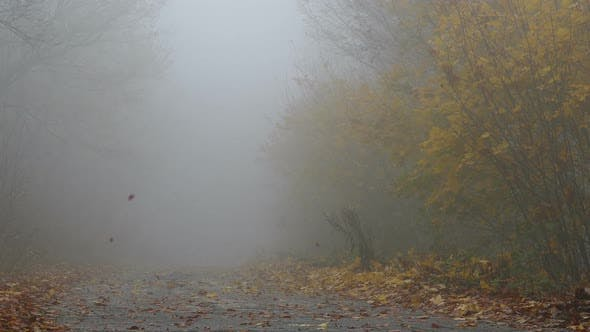 Thumbnail for Park During Autumn Misty Day