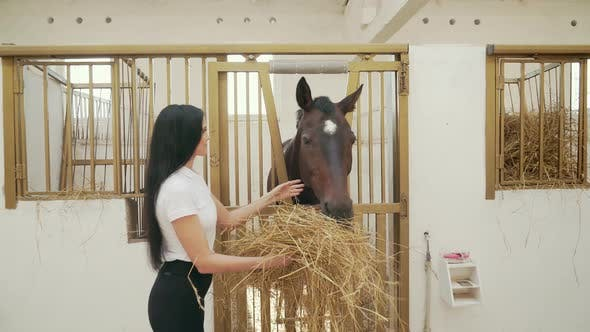 Thumbnail for Woman Feeding Horse with Fresh Hay.