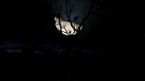 Moon At jungle