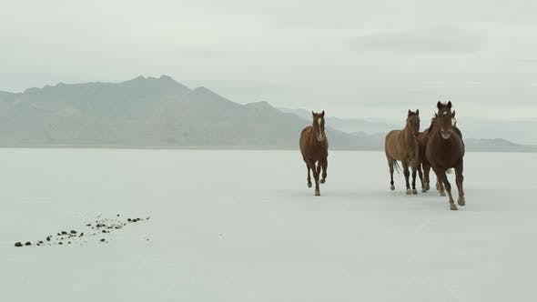 Thumbnail for Horses running across salt flats