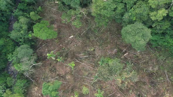 Top view of a patch of tropical rainforest that is deforested