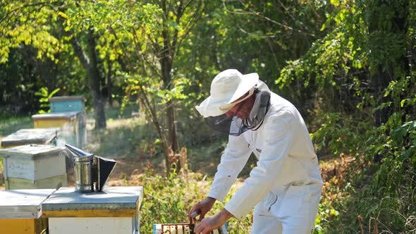 Beekeeper holding a honeycomb. Beekeeper inspecting honeycomb frame at apiary