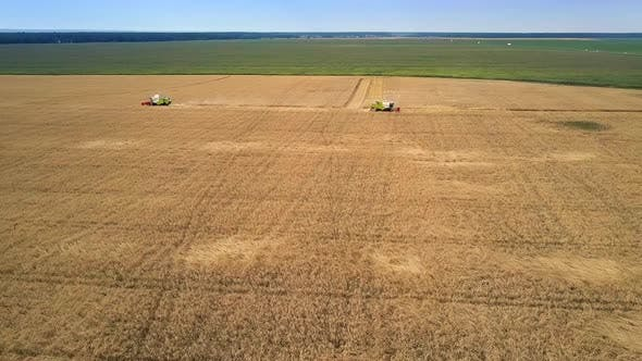 Thumbnail for Aerial View Endless Golden Green Fields with Combines