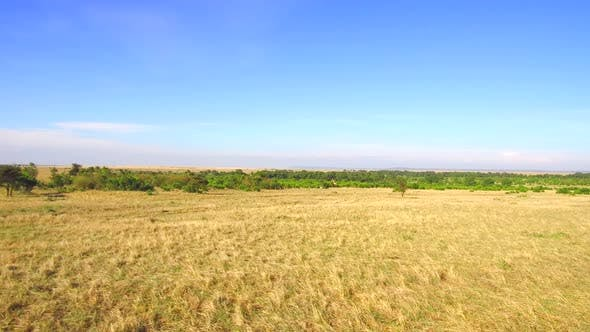 Thumbnail for Maasai Mara Savannah at Africa