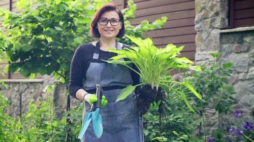 Gärtnerin mit Zierpflanze Hosta zum Teilen und Pflanzen