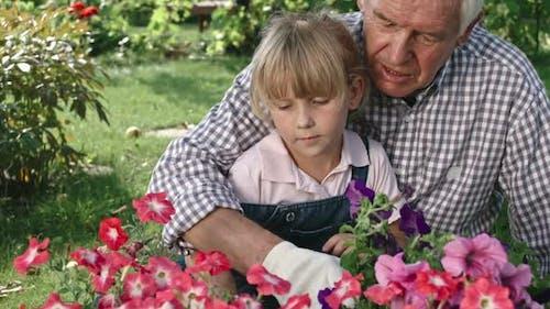 Grandfather Gardening with Grandchild
