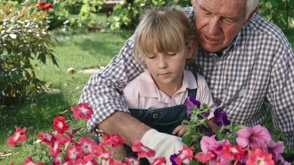 Cover Image for Grandfather Gardening with Grandchild