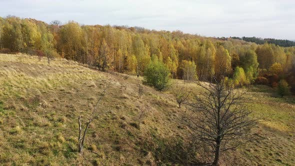 Thumbnail for Flying above trees covered with yellow leaves. Autumn forest.