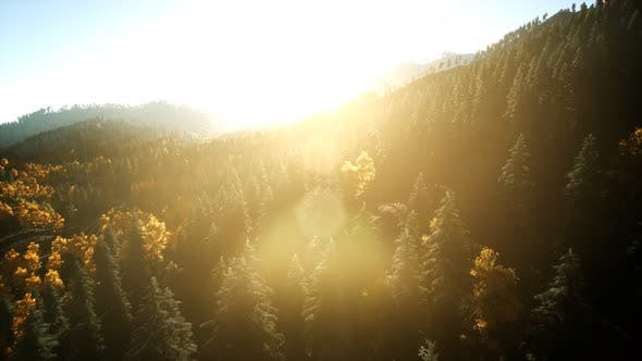 Thumbnail for Aerial Drone View Flight Over Pine Tree Forest in Mountain at Sunset