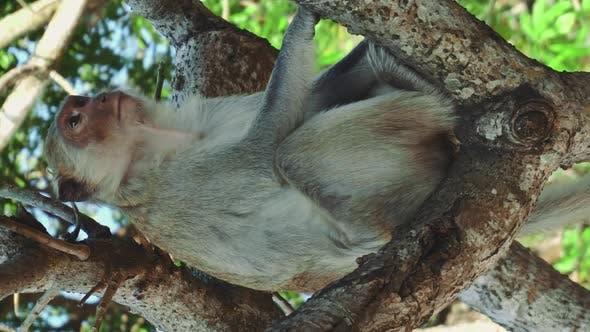 Thumbnail for Monkey Sitting on Tree