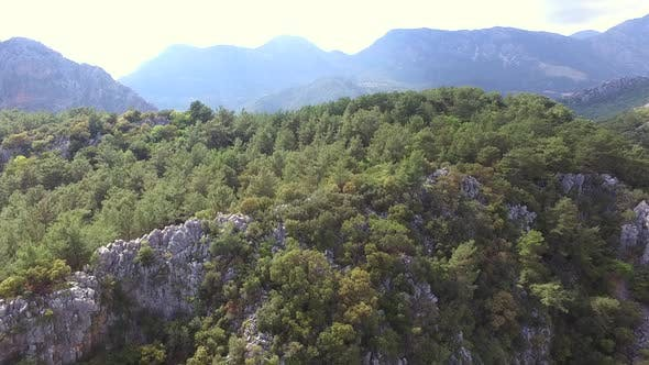 Thumbnail for Hilly Terrain Covered With Pine Forests