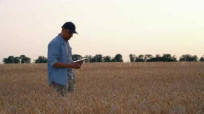 Farmer Checking Quality of Crops in Field