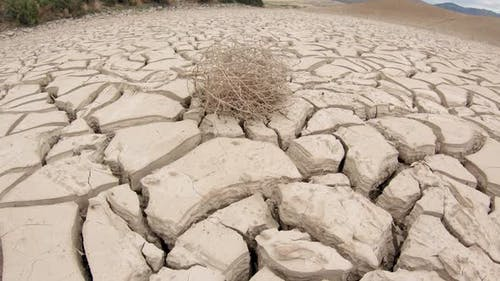 View of tumbleweed on dried cracked mud in waterhole