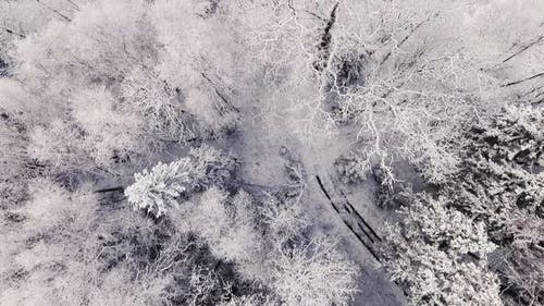 Incredible and Snowy Winter Forest