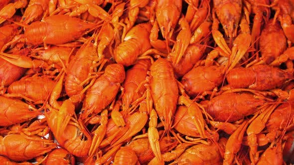 Footage Red Boiled Crawfish  Rotate on a Tray