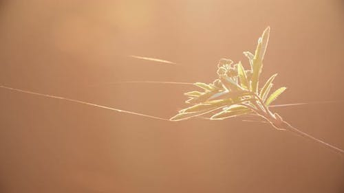 Young spring foliage develop in the wind of a spider web, a beautiful background. Sunset red light