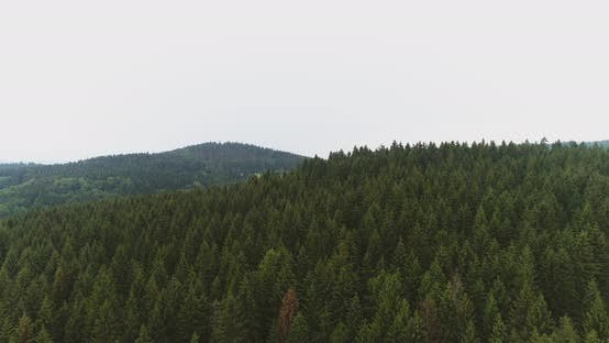 Thumbnail for Aerial Shot of Woods Forest Nature Landscape