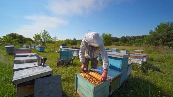 Thumbnail for Farmer on the apiary