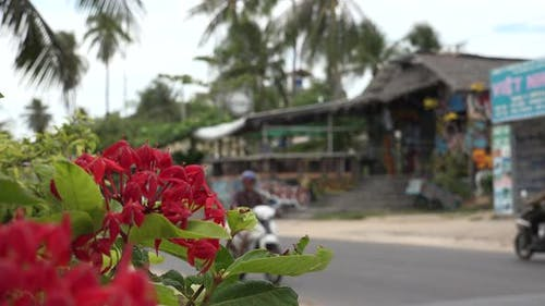 Southeast Asia and Roadside Cafe