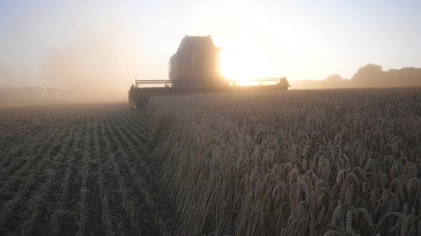 Cover Image for Modern Harvester Gathering Crop of Wheat at Sunset. Combine Riding Through Rural Cutting Stalks of