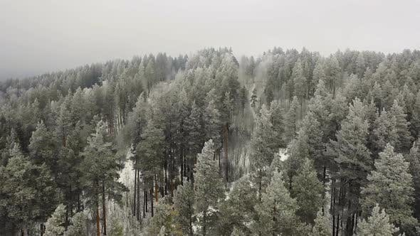 Thumbnail for Drone Flyght Over Winter Pine Forest in Mountains