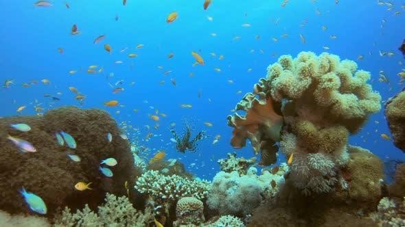 Thumbnail for Underwater Scene Tropical Seascape