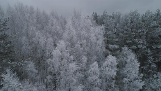 Winter Landscape Forest Field