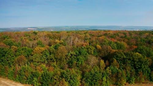 Beautiful wood at fall season