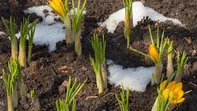Timelapse Spring Melting Snow