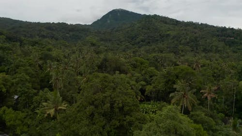 Dense Tropical Rainforest on the Slopes of a Mountain