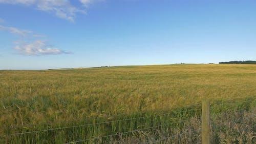Green fields, Scotland