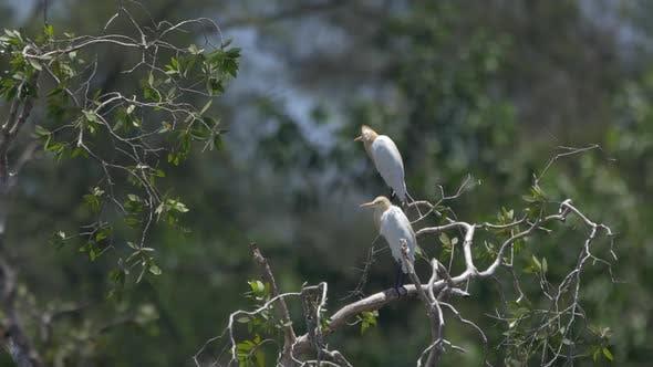 Thumbnail for White Birds