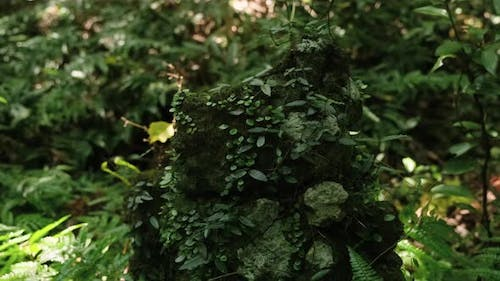 Plants of rainforest jungle forests and moss attached to rocks.