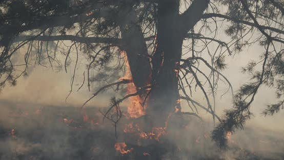 Fire Destroys The Roots Of The Forest