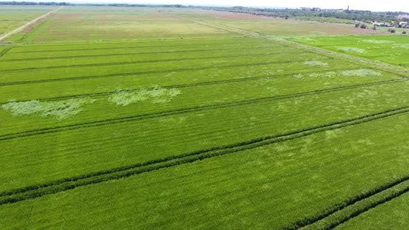 Thumbnail for Aerial Shot of a Huge Farming Land with Many Ditches on a Sunny Day in Summer