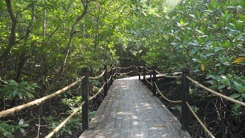 Wooden Bridge in the Mangroves