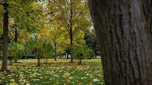 Atmosphärischer Herbstpark im Oktober