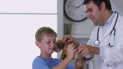 Veterinarian giving puppy a checkup