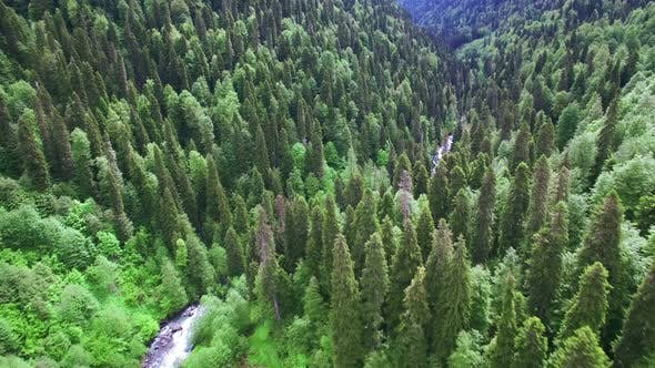 Thumbnail for Aerial View Above Green Forest In Caucasus