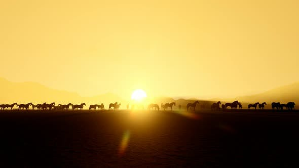 Thumbnail for Horses And Sunset Landscape