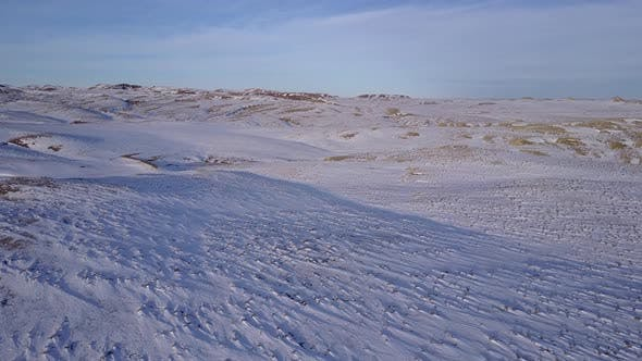 Thumbnail for Prairie Buffalo in Winter Rolling Hills in Wyoming United States