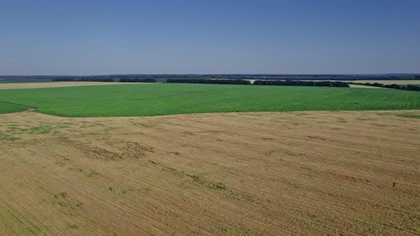 Top View to the Farm Wheatfield