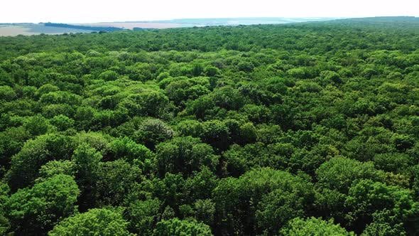 Aerial Forest View at Summer Time