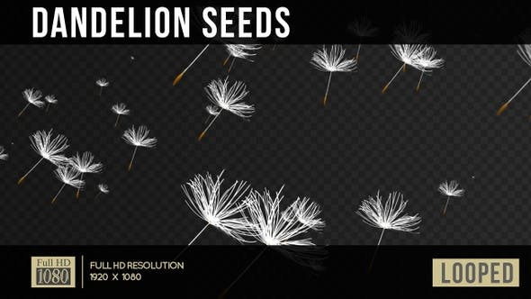 Thumbnail for Dandelion Seeds