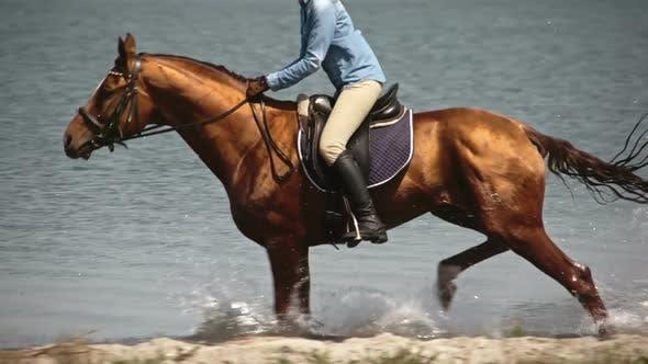 Thumbnail for Elegant Horse Galloping to Shore