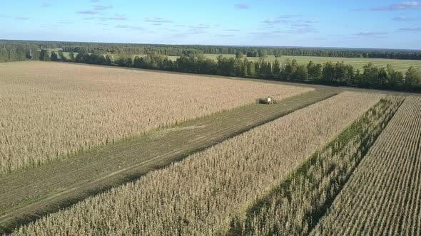 Großes Ackerland und selbstfahrende Futtererntemaschine