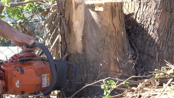 Thumbnail for Cutting the Tree