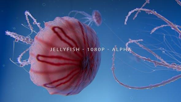 Thumbnail for Jellyfish Swimming Underwater