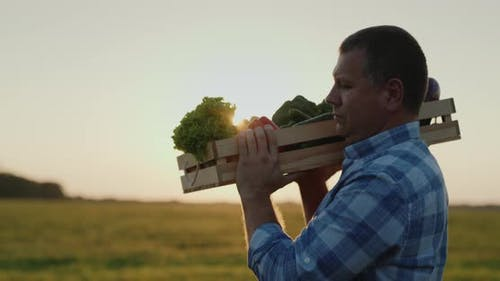 Mature Farmer Carries on the Shoulder a Box of Vegetables at Sunset